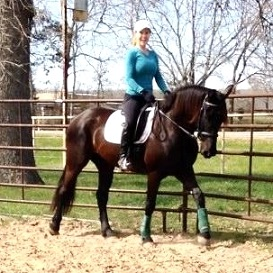 Friesian Sporthorse Boca ROF Friesian Warmblood