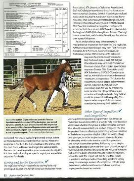 Lancaster ROF in Warmbloods Today magazine
