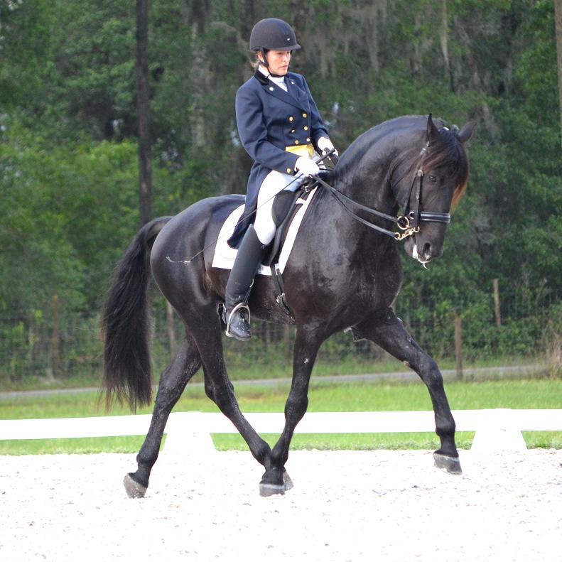 Lexington FEI Friesian Sporthorse