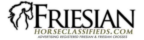 Friesian Horse Classifieds ~ registered Friesians & Friesian Crosses