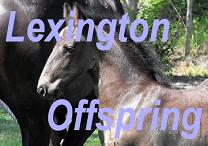 Lexington Offspring